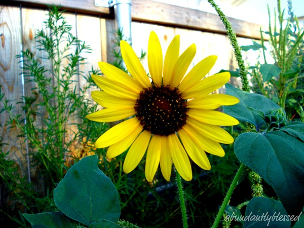 FlowerBackyardAB