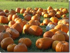 pumpkin 003