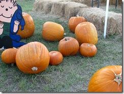 pumpkin 005