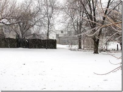 Snow02-01-11a