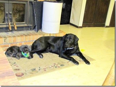 Sadie&Rigg's02-18-11a