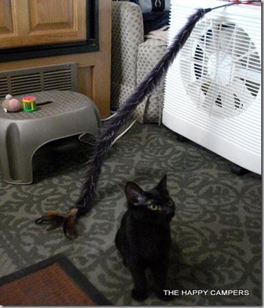 cat toys 006