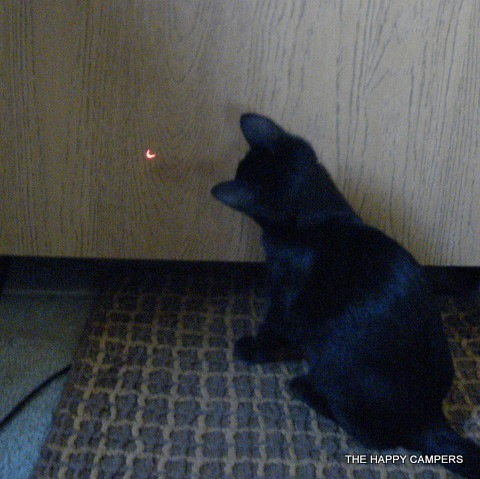 business cat red dot. usiness cat red dot.