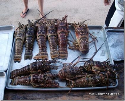 lobster 013