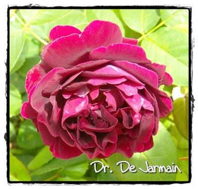 dr. De Jarmain