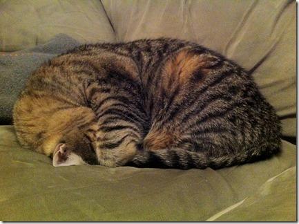 Jasper curled up