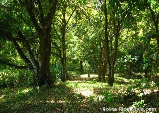 Costa Rica Backyard