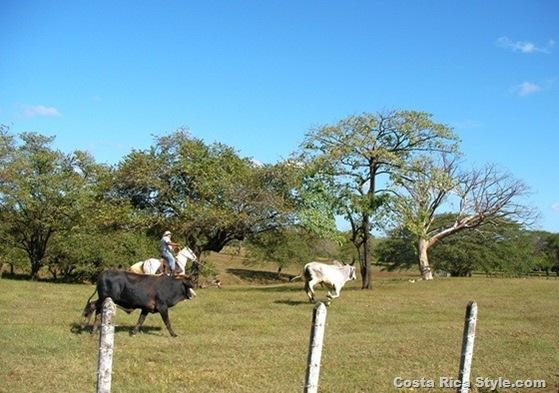 Costa Rica Cowboys 2