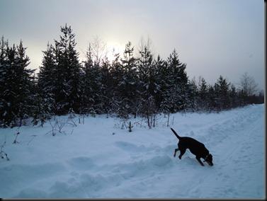 Winter_Morn