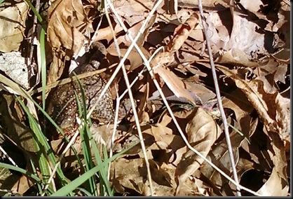 snakenfrog