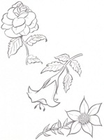 flores_47