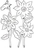 flores_57