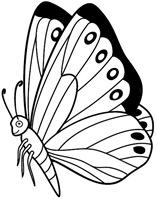 jyc mariposas (7)