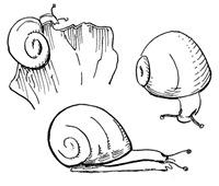 1 - snailsketch