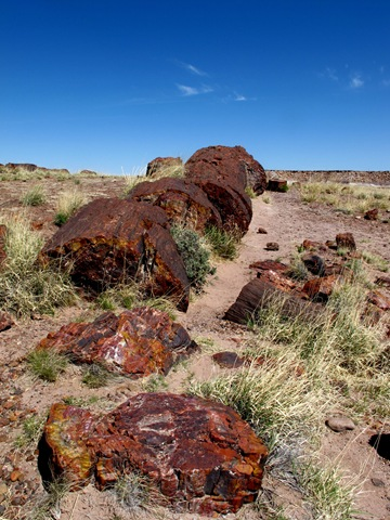 Petrified Forest National Park Giant Logs Trail (9)