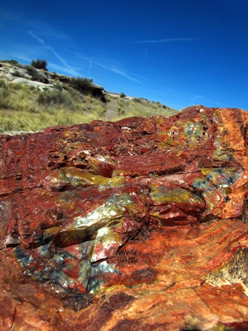 Petrified Forest National Park Giant Logs Trail (5)