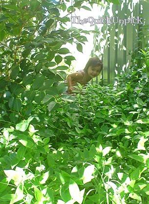 its jungle...