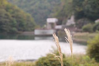 ダムとススキその1