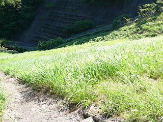 天端より下流側の堤体を望む