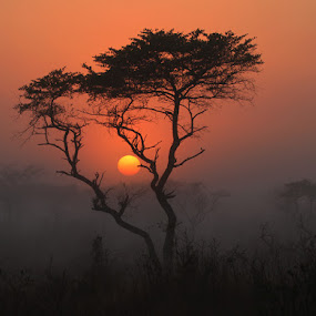 Tembe sunrise by George Watson - Landscapes Sunsets & Sunrises ( cold, bushveld, trees, sunrise, misty )