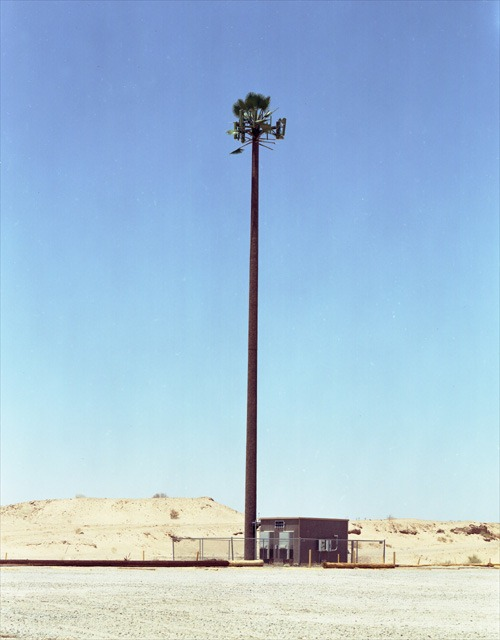 cell-phone-trees (13)