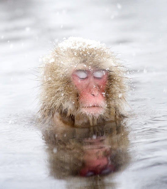 snow-monkeys (11)