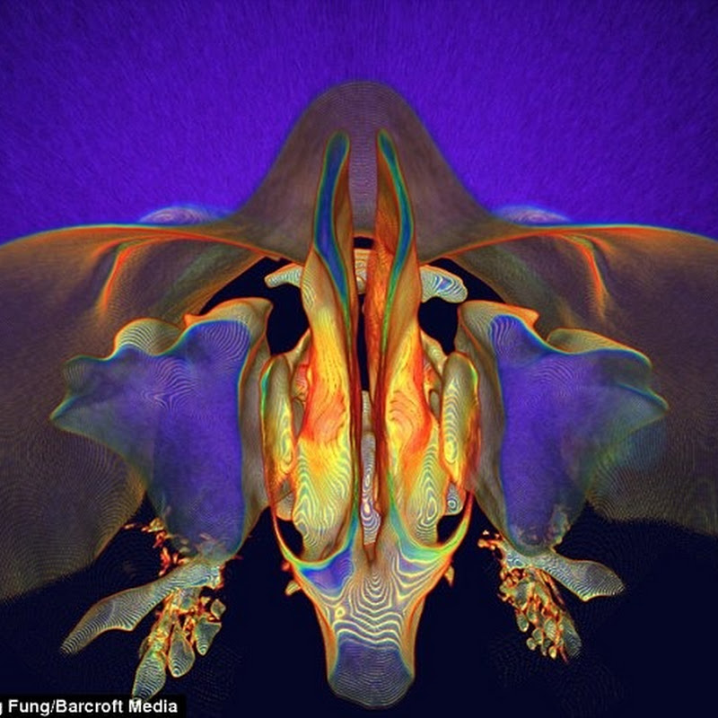 CT Scan Art from human body parts