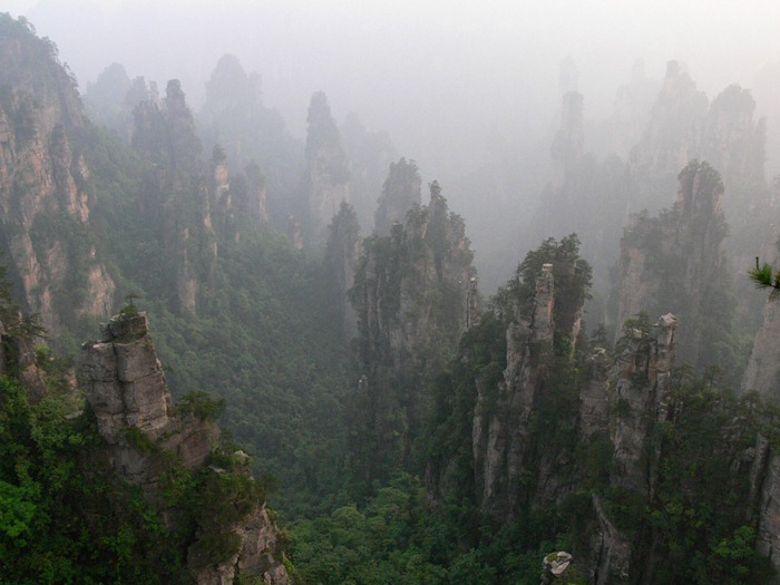 zhangjiajie (16)