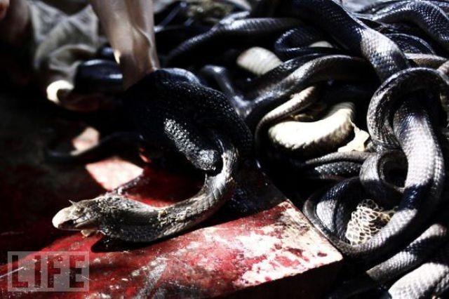 snake-burger (7)