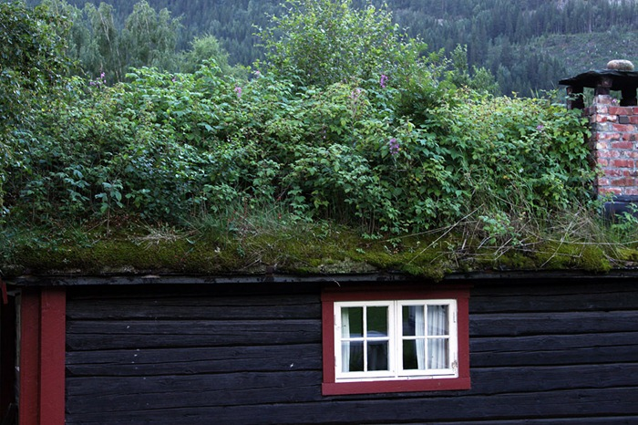 green-roof-norway (2)