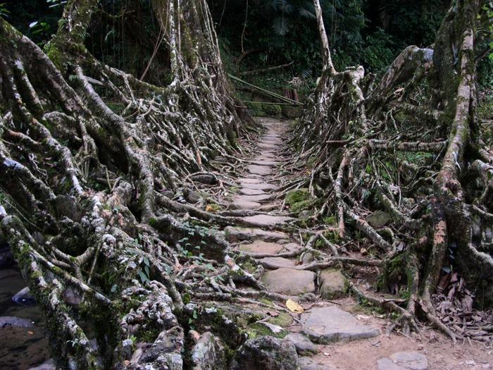root-bridges (1)