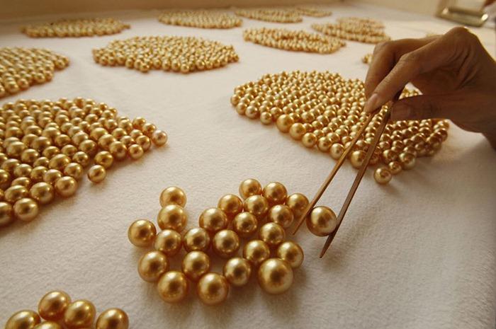golden-pearl (30)