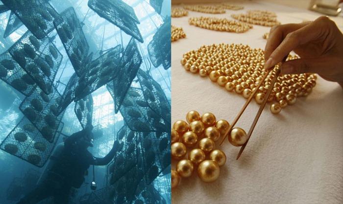 golden-pearl (36)