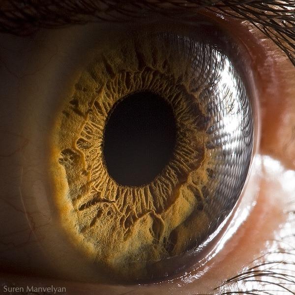macro-eyes (4)