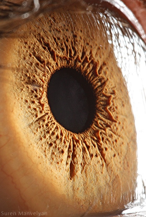 Stunning Photography of Eye Microscopic Look