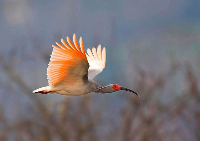 The-Worlds-Rarest-Birds-2-008