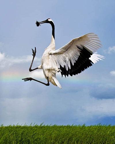 The-Worlds-Rarest-Birds-2-005
