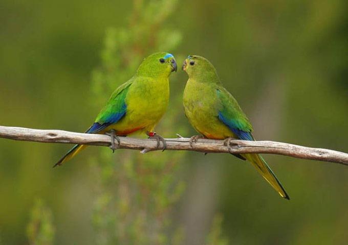 The-Worlds-Rarest-Birds-2-006