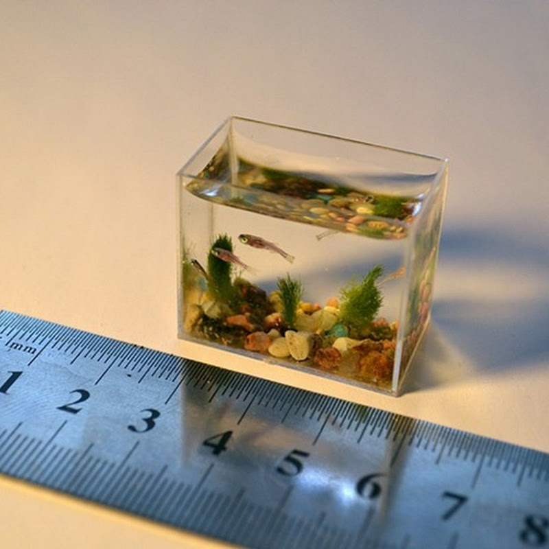 The World's Smallest Aquarium