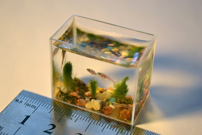 smallest-aquarium2