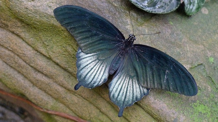 butterfly-exhibition1