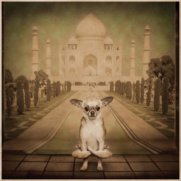 yoga-dogs2