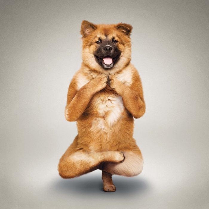 yoga-dogs9