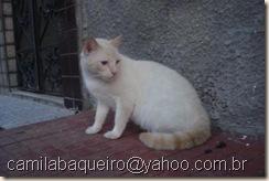camilabaqueiro@yahoo.com.br