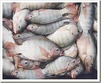 zoom-peixe-156
