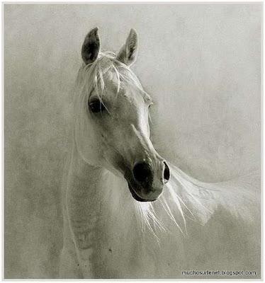 Le cheval arabe
