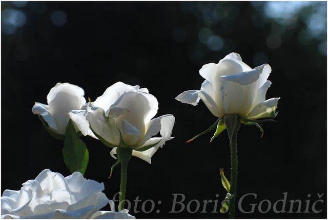 Boris_Godnic_1.jpg