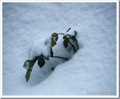 snowday 001