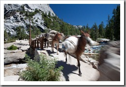 Yosemite Day 2-236