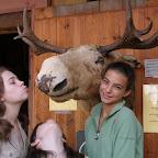 Bergen Bryggen Moose.JPG